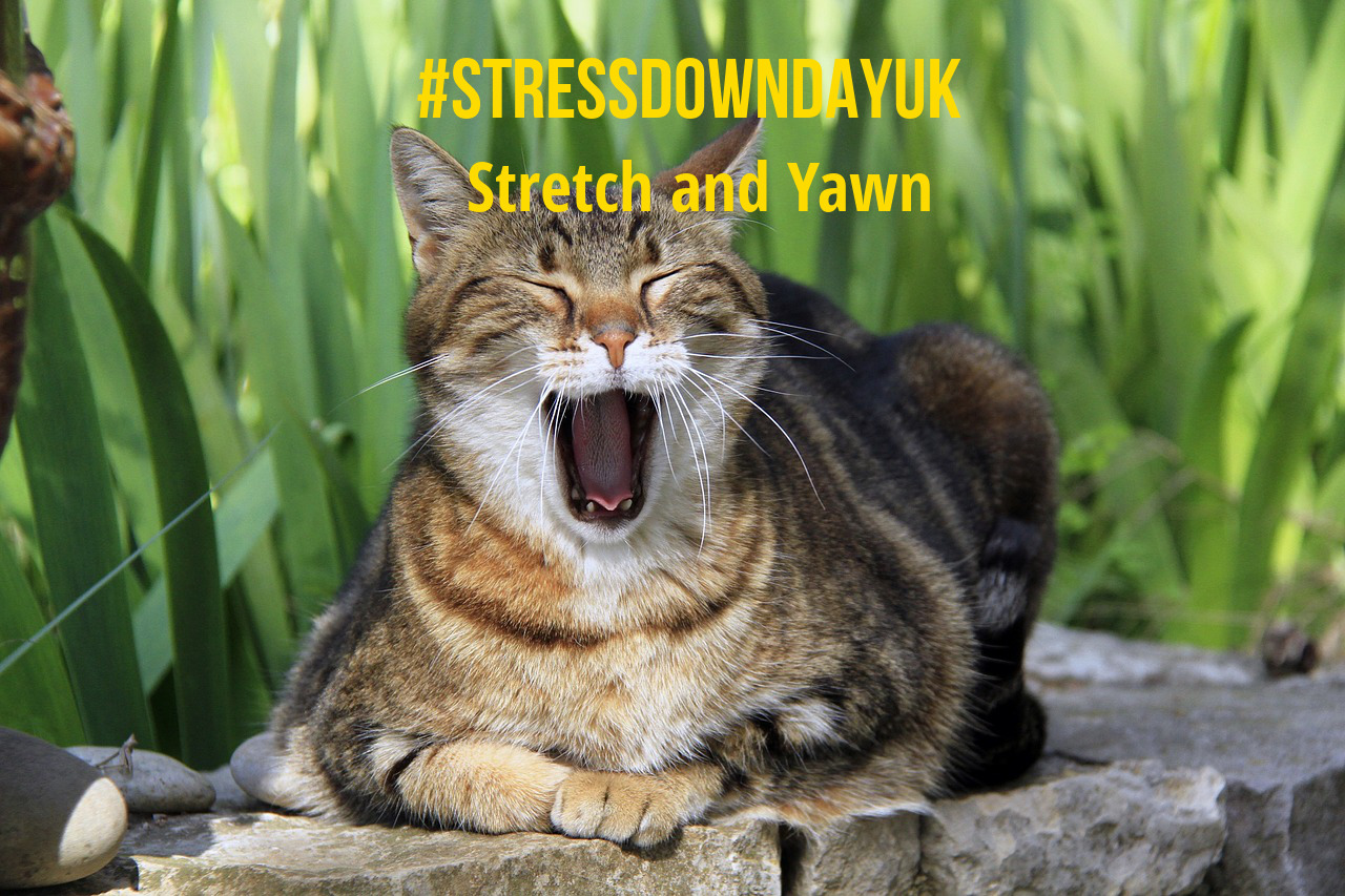 Stress Down Day Stretch and Yawn - cat