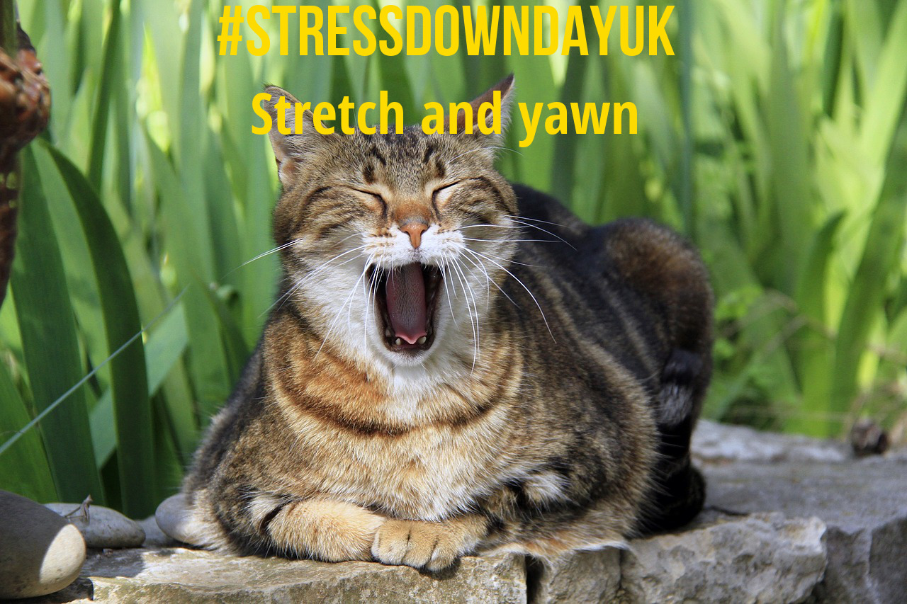 Cat yawning - image to inspire workplace well-being
